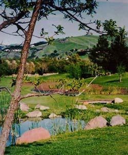 Scenic Moraga
