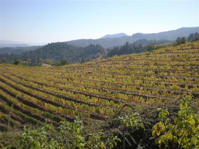 Views from Newton Winery, St. Helena