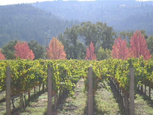 Fall Napa Valley